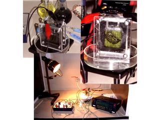 NanoEcotechnology